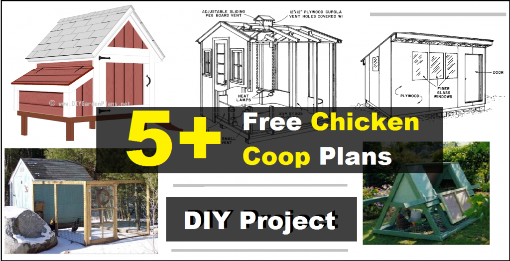 5 free chicken coop plans construct 101 for Plans for a chicken coop for 12 chickens