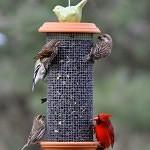 sunflower tower birdfeeder plans